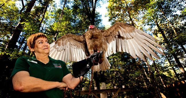 Charlotte CAROLINA RAPTOR CENTER
